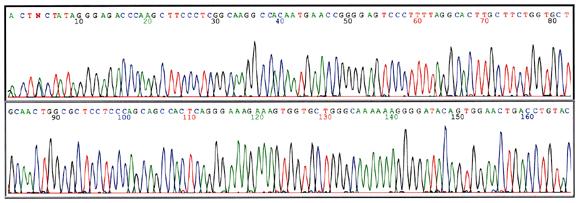 sequencing.jpg